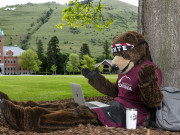 UM's Mascot Monte the Grizzly Bear using a laptop outside by a tree in the Oval