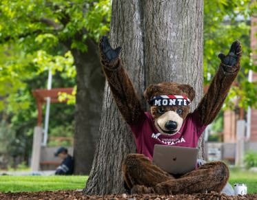 Monte UM's mascot, reading our blog on his laptop.