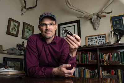 A picture of UM biology Doug Emlen holding a beetle in his office and surrounded by other horned specimens.