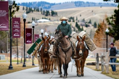 A man in a cowboy hat and green jacket rides atop a mule with some more behind him up a sidewalk on campus