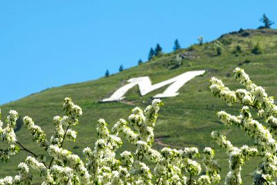 White flowers are seen below the M on Mount Sentinel.