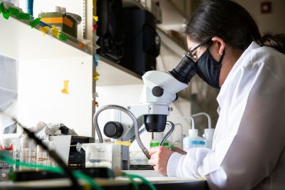 A female UM graduate student wearing a white lab coat looks into a microscope in a lab.