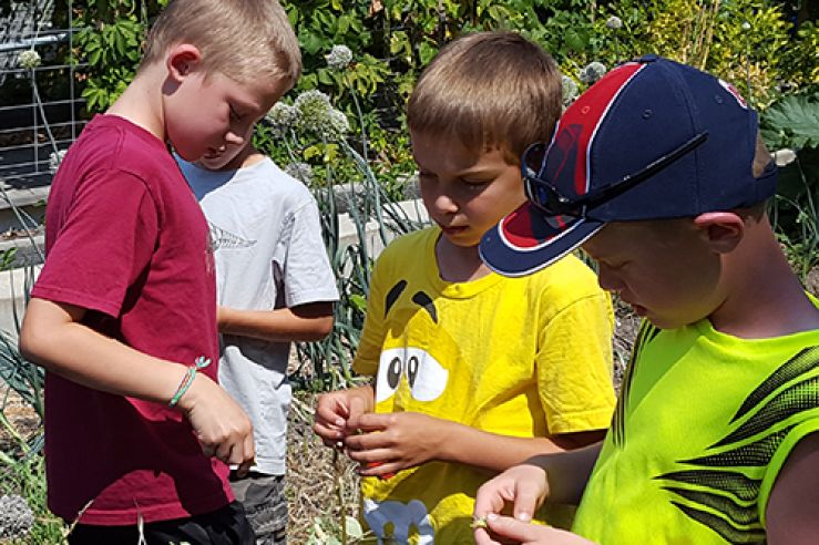 Campers studying plants